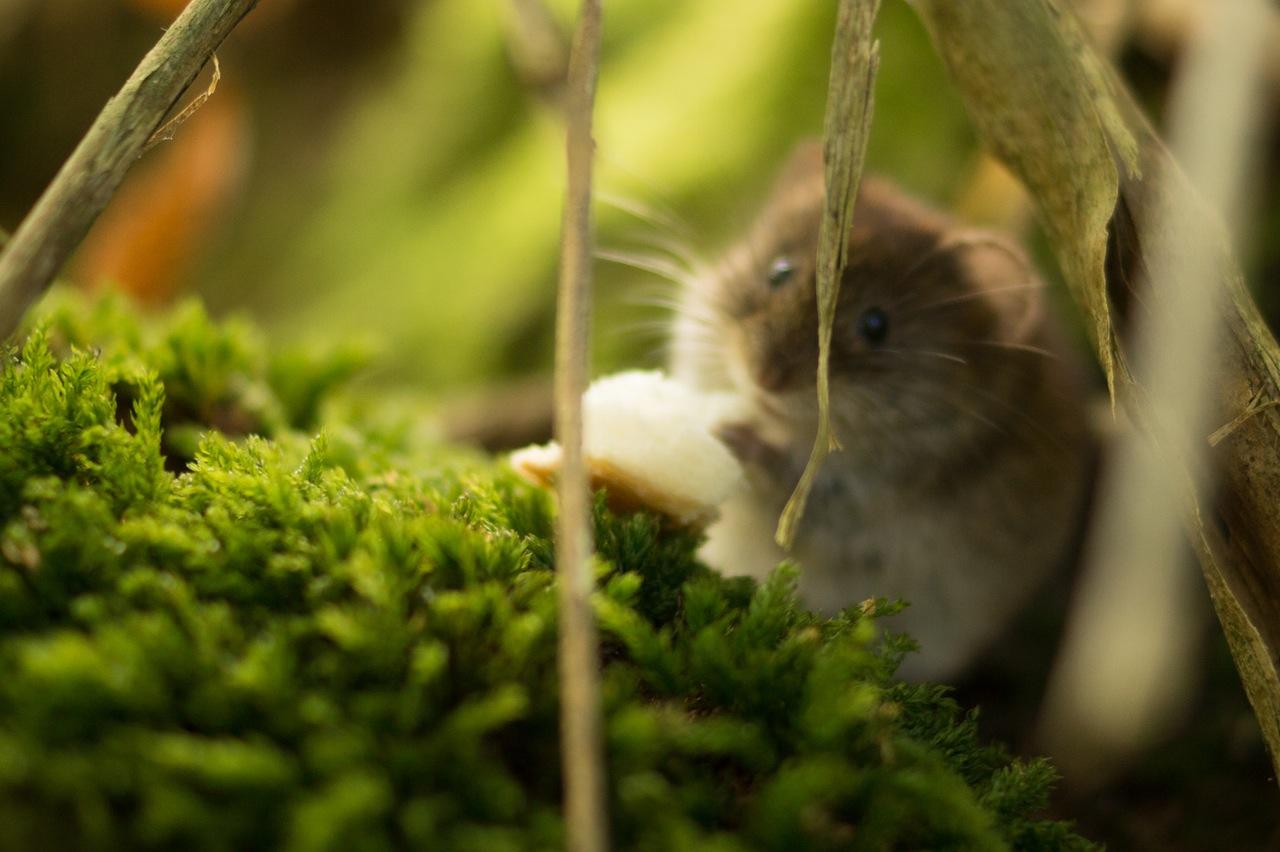 Hamsterradblog